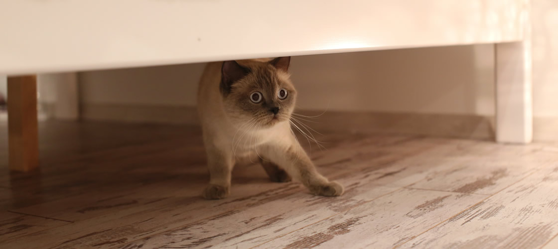 Cat under bed - what is it like to move into a foster care home