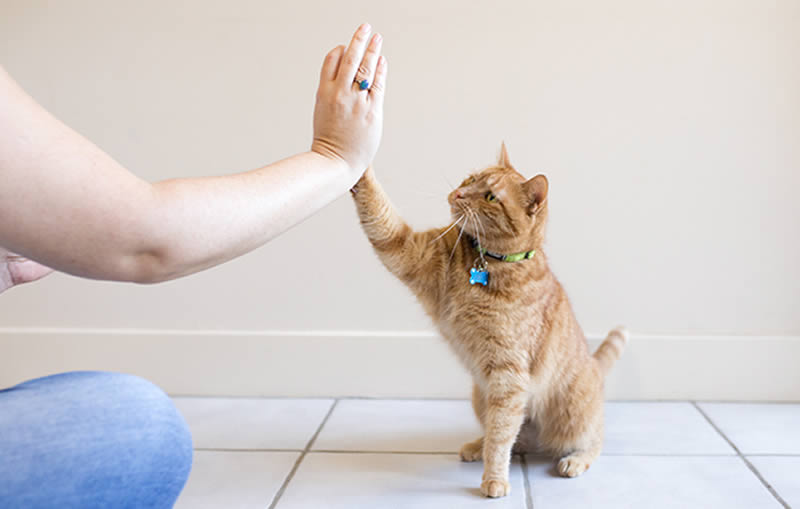 high five to cat